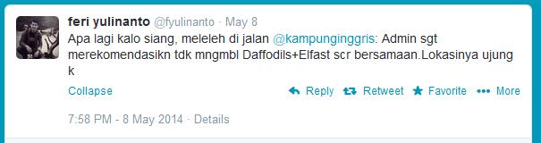 daffodils + Elfast